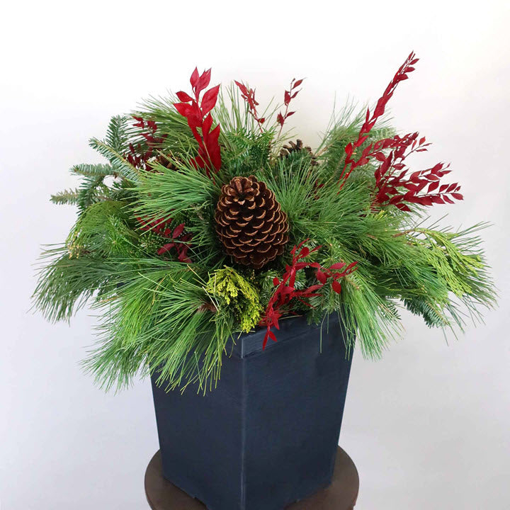 Red Ruscus with Cones Pot - Ship to Store - Pickup In Store Only