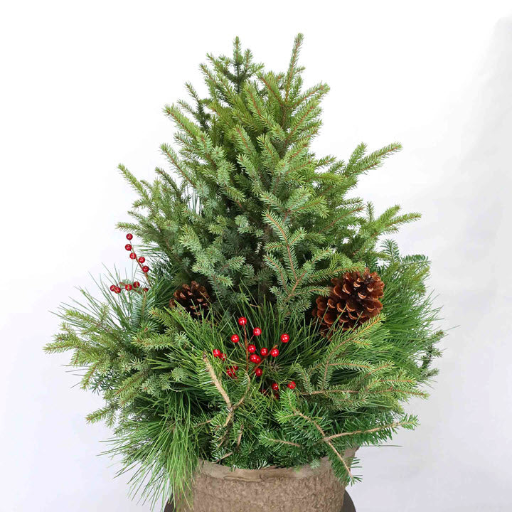 Winter Spruce Pot - Ship to Store - Pickup In Store Only