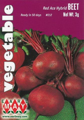 Red Ace Hybrid Beets Seeds
