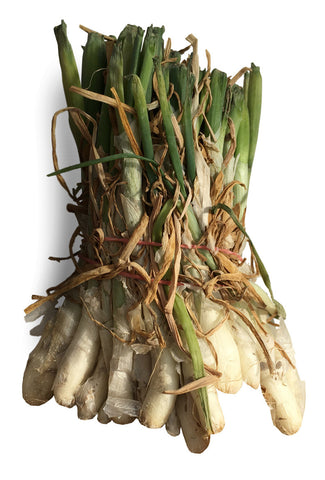 Onion Plants - White Bermuda
