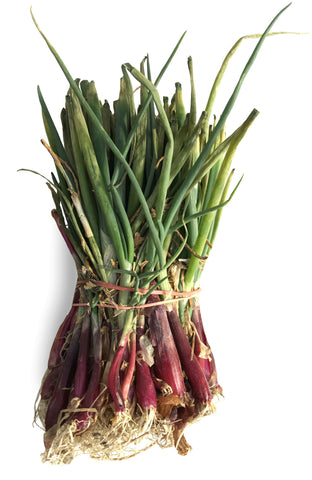 Onion Plants - Red Candy Apple