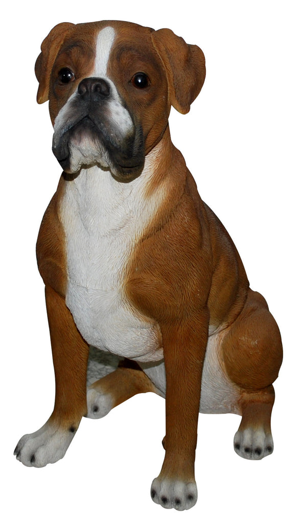 Border Concepts Sitting Boxer