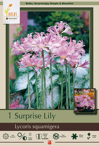Lily, Surprise - Ship to Store - Pickup In Store ONLY