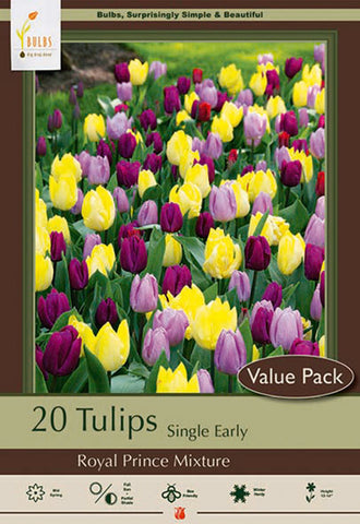 Tulip Royal Prince Mixture
