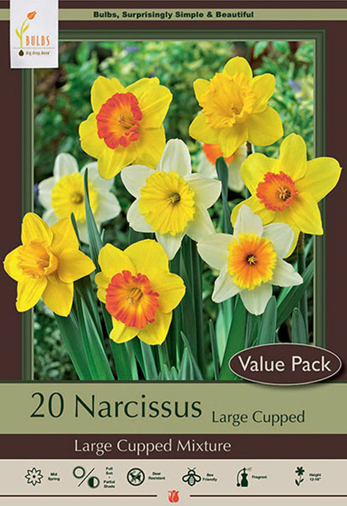 Daffodil Large Cupped Mix