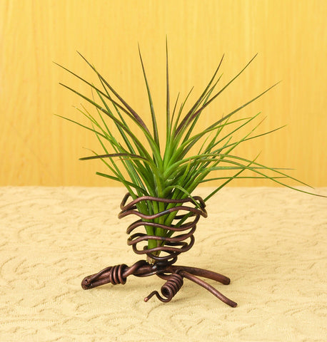 Air Plant Holder Single