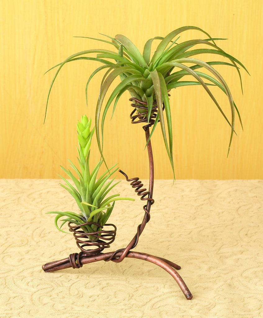 Air Plant Holder Double