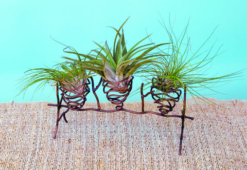 Air Plant Holder Triple
