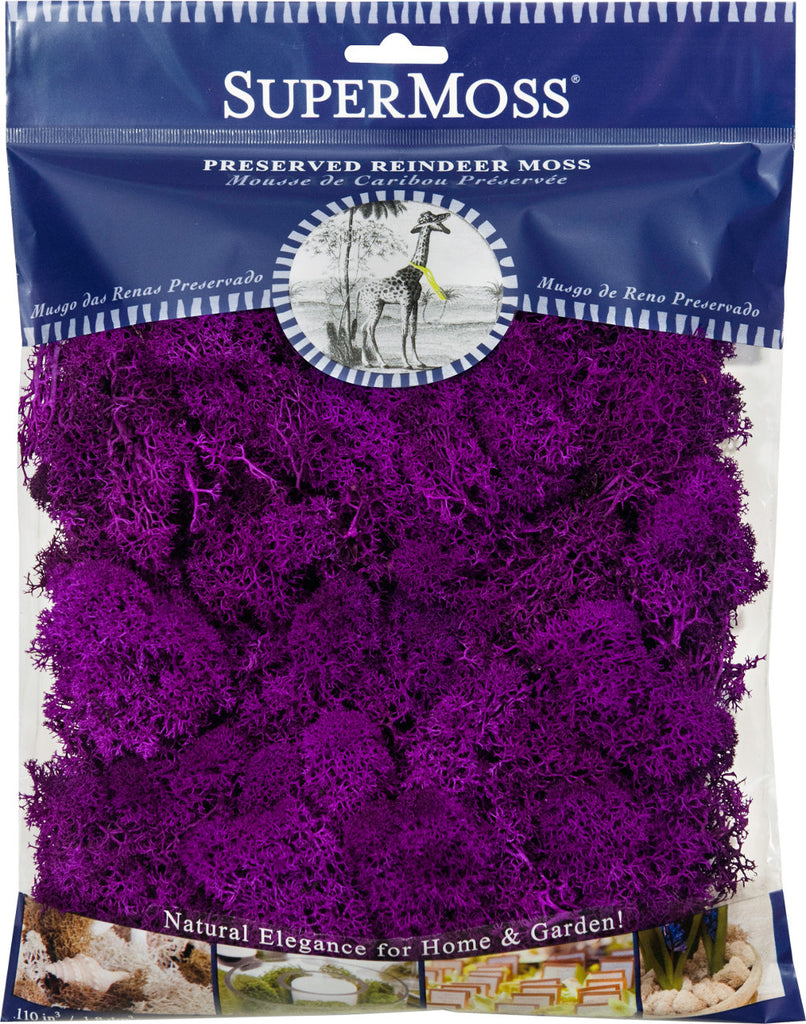 Reindeer Moss - Purple