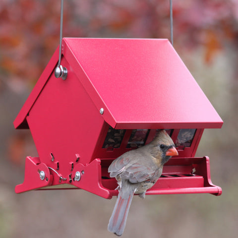 Squirrel Resistant Bird Feeder