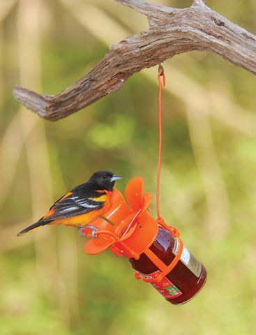 Oriole Jelly Bird Feeder