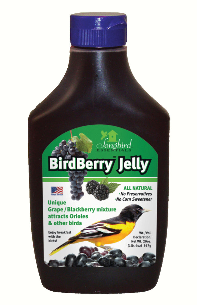 Bird Berry Oriole Jelly