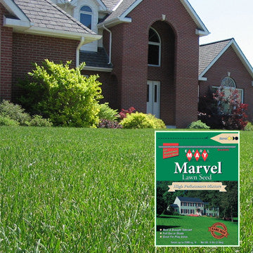 Earl May Marvel Turf-Type Tall Fescue Blend Grass Seed