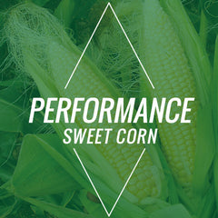 Performance Sweet Corn