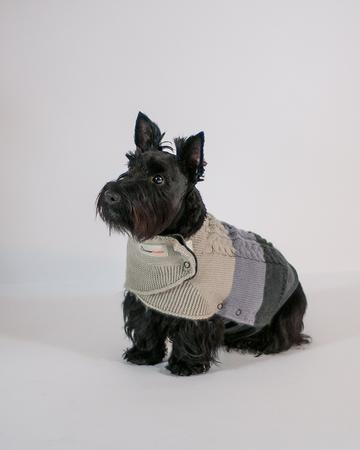 ThunderSweater for Dog Medium 24-40lbs