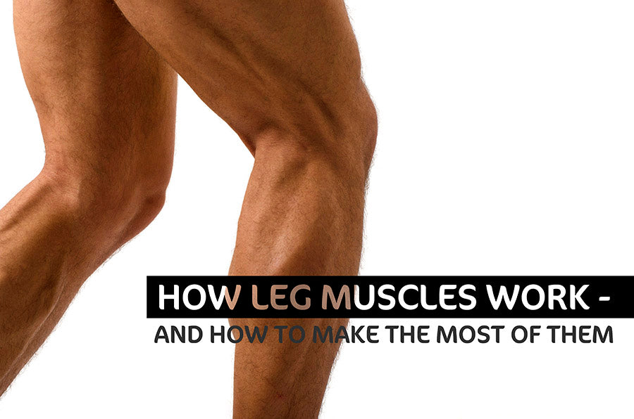 How Leg Muscles Work