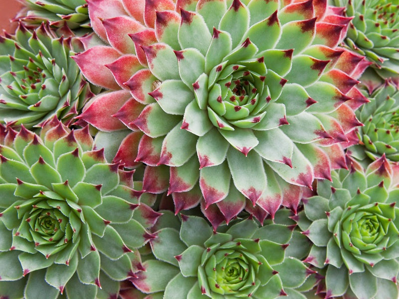 Succulent Care: Why Are Leaves Falling Off My Succulents?