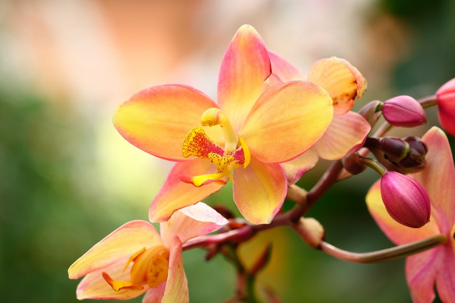 How to Take Care of Orchid Plants During Fall Season