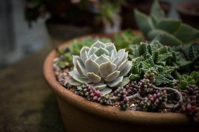 Bizarrely Beautiful: 5 Of The Most Peculiar Succulents You've Ever Seen