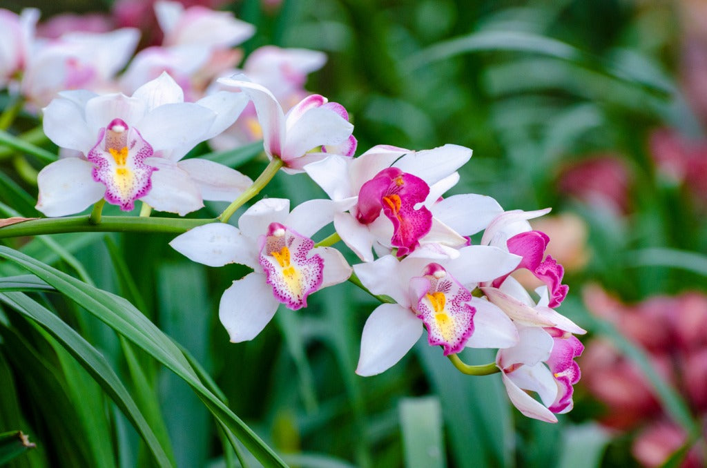 What Is Your Birth Orchid?