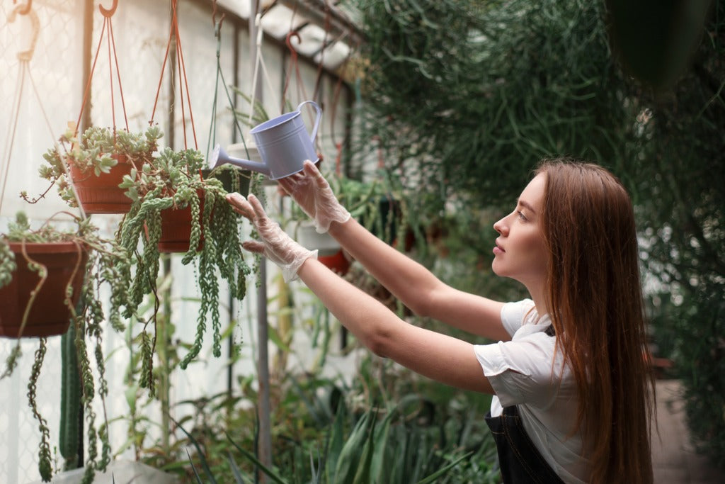 Plant Care: A Summer Survival Guide for Indoor Plants