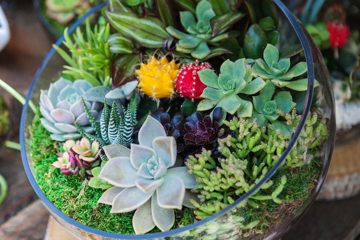 Do Succulents Produce Oxygen?