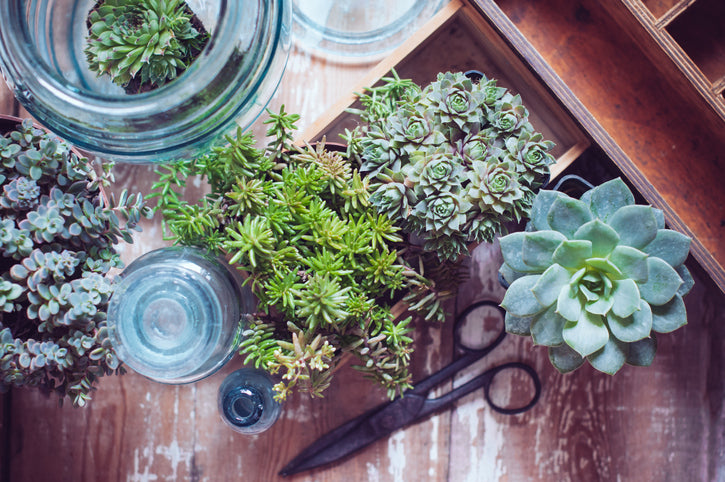 How to Grow Your Succulent Collection From Offsets, Leaves, and Cuttings