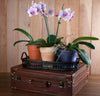 3 Types Of Indoor Orchid Plants You Need In Your Home Right Now