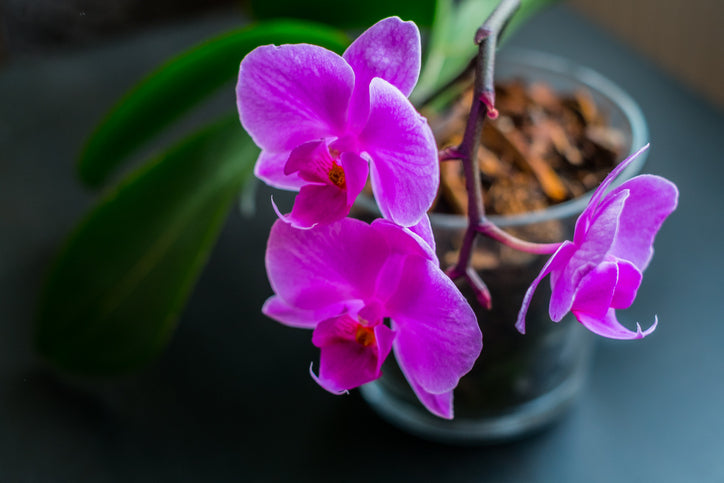 The Worst Advice We've Ever Heard About Growing Orchids