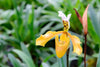 3 Rarest Orchids In The World