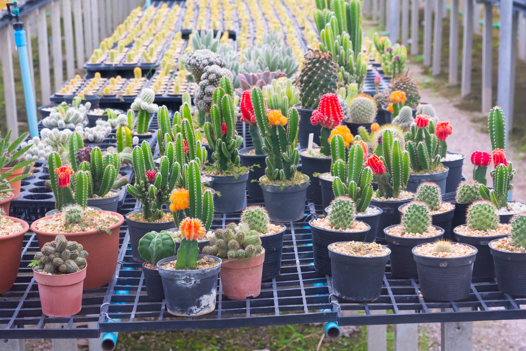 5 Reasons Why Succulents Are Super Plants