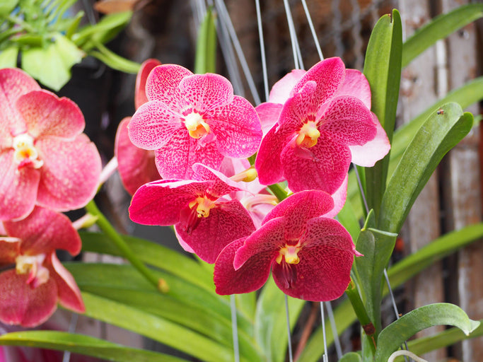 Our Favorite Orchids for Autumn