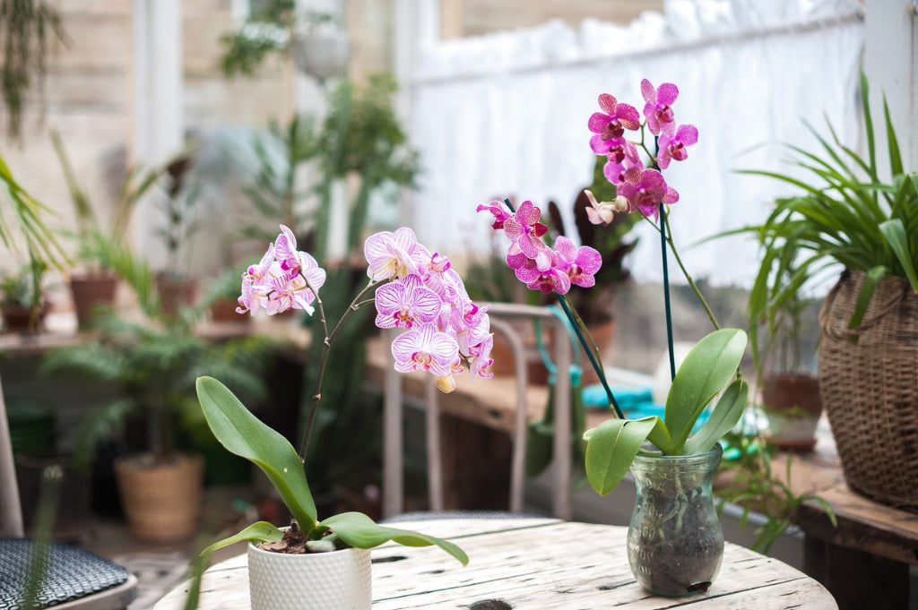 Outstanding Benefits of Having Orchid Flowers At Home