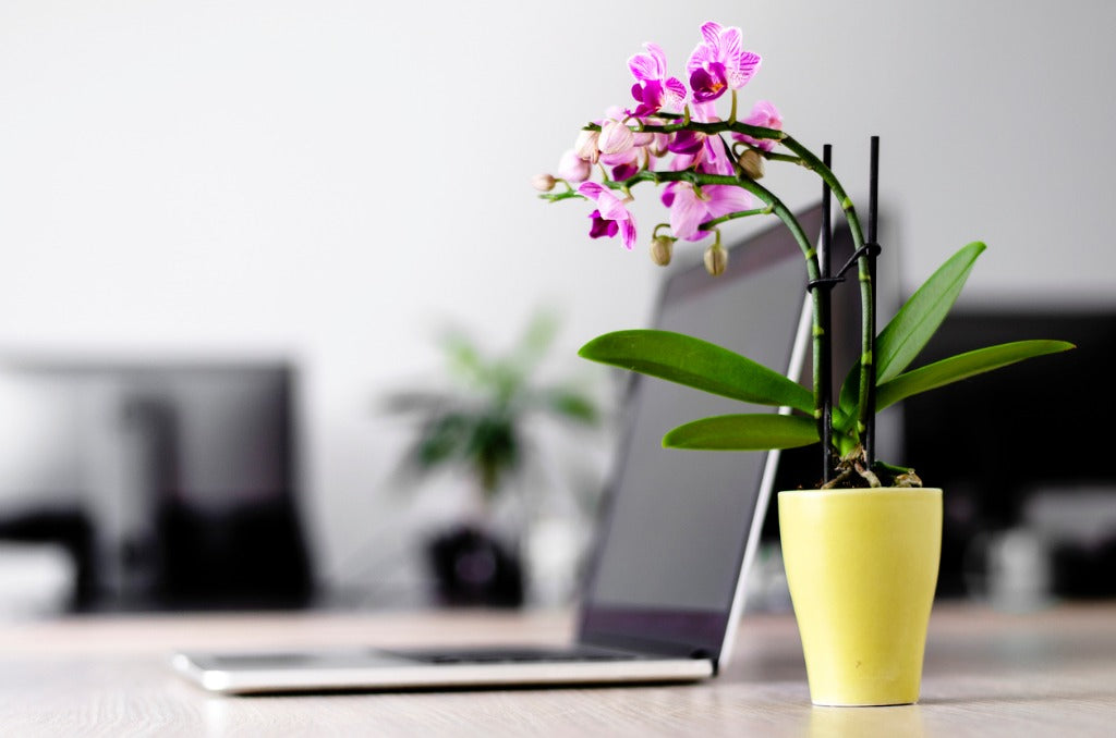The Best Plants and Flowers for Your Office