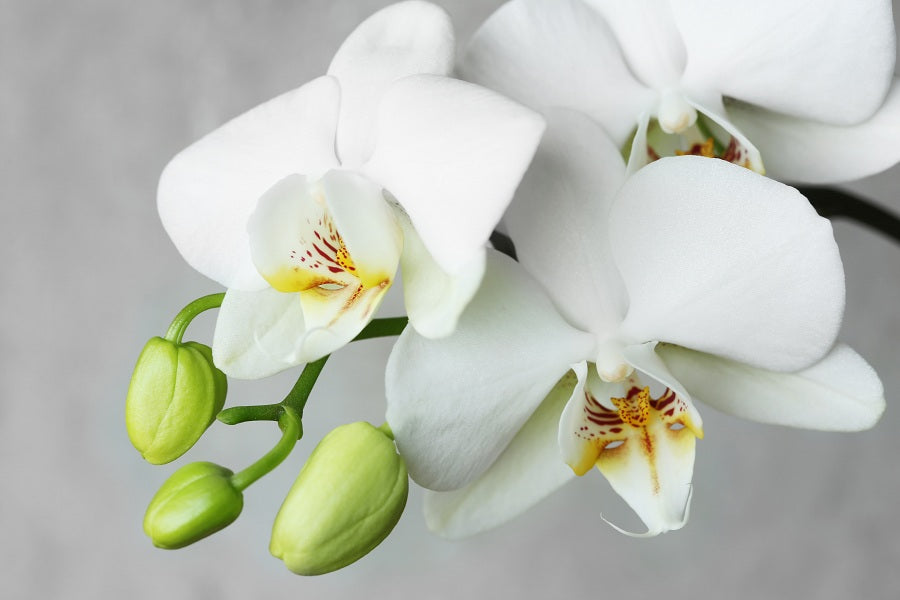 What Are the Different Parts of An Orchid Plant?
