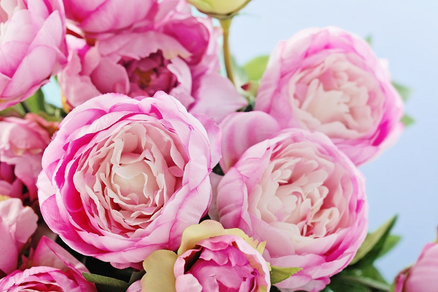 All About Peonies Flower Meaning Types Of Peonies And How To Grow