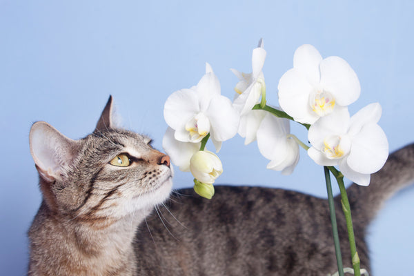 A Complete Shopping List Of Non Toxic Indoor Plants For Pet Parents