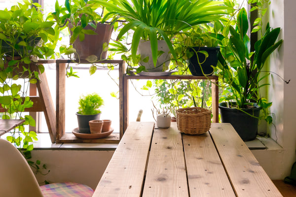 air-purifying-indoor-plants-2
