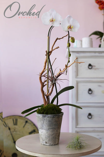 5 Pretty Indoor Plants That Bring Positive Energy
