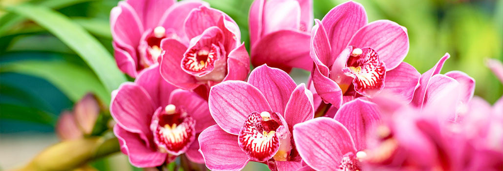 Orchid Care How To Fertilize Orchids Naturally Orchidrepublic