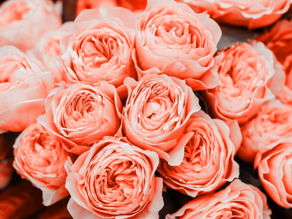 Pantone Color Of The Year 2019 Flowers In Living Coral Orchid Republic
