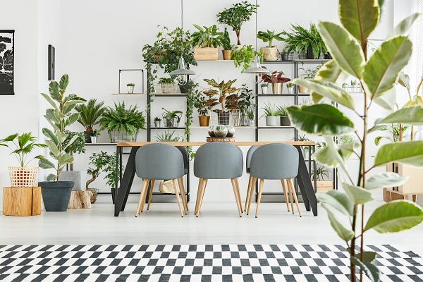 Big And Beautiful Indoor Trees For Instant Jungle Chic Vibes At