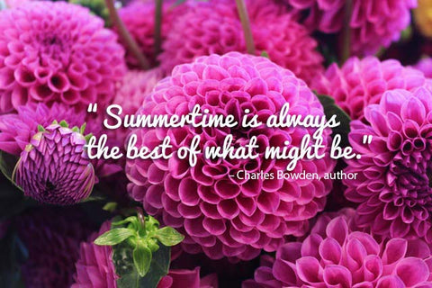 14 Summer Quotes That Are As Beautiful As The Season Orchidrepublic