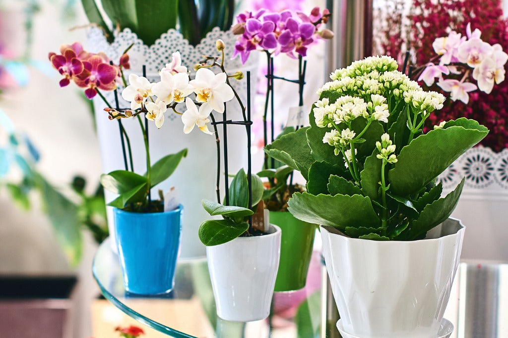 orchids-health-healing