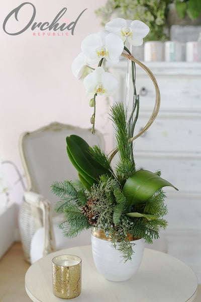 white-christmas-orchids