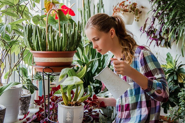 indoor plant care how to water your houseplants properly orchidrepublic. Black Bedroom Furniture Sets. Home Design Ideas