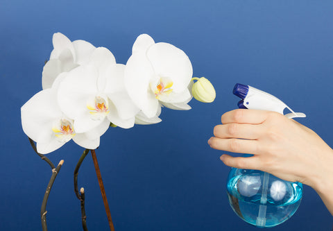 how-to-water-indoor-orchids