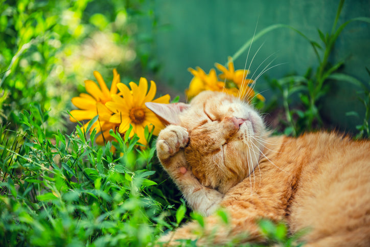 What Plants Are Safe To Have Around Cats And Dogs