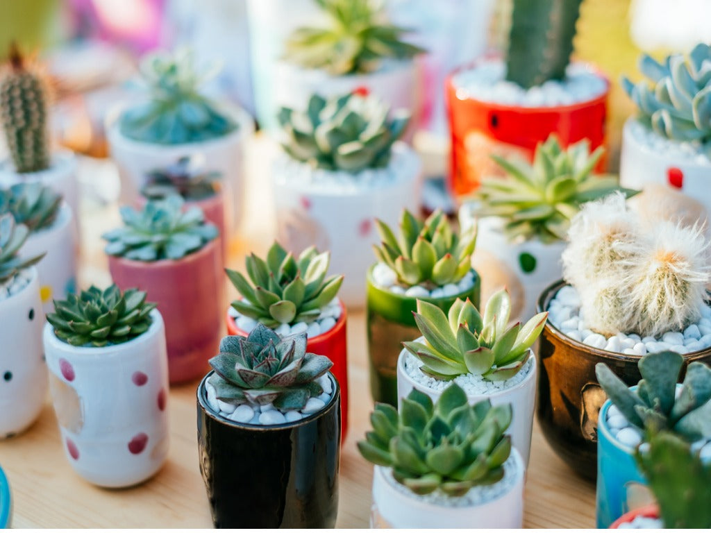 plants-succulents-christmas-gift