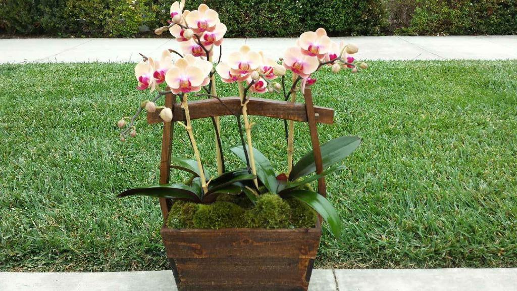 zz Basket of Orchids